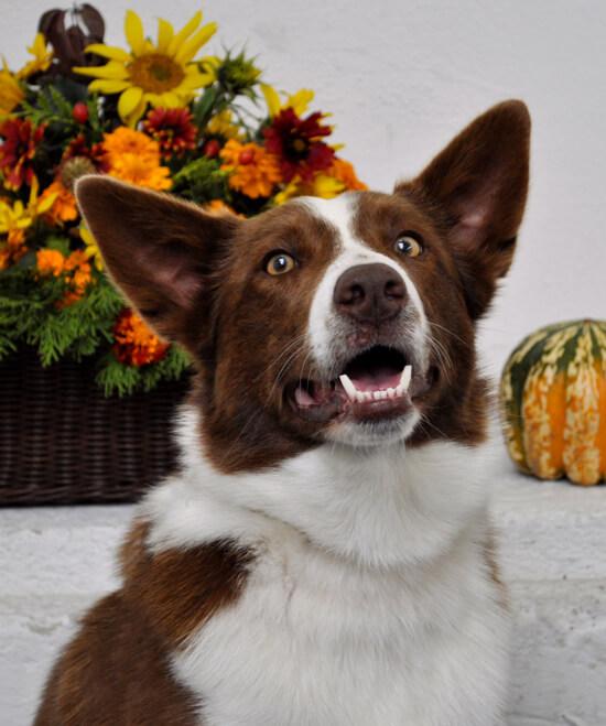 DANTE FILIP Quick angel - chovný pes