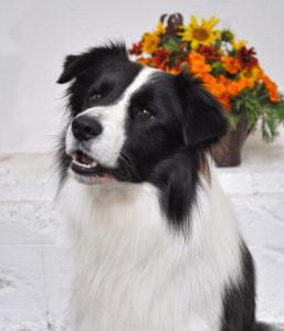 KEVIN KENNY Zagato - chovný pes