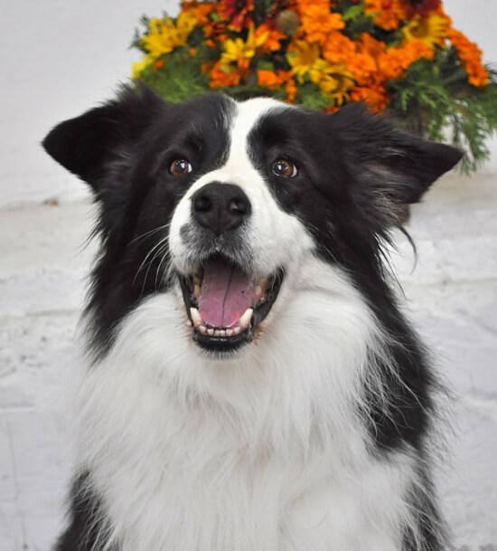 ORLAND Fatranský sen - chovný pes