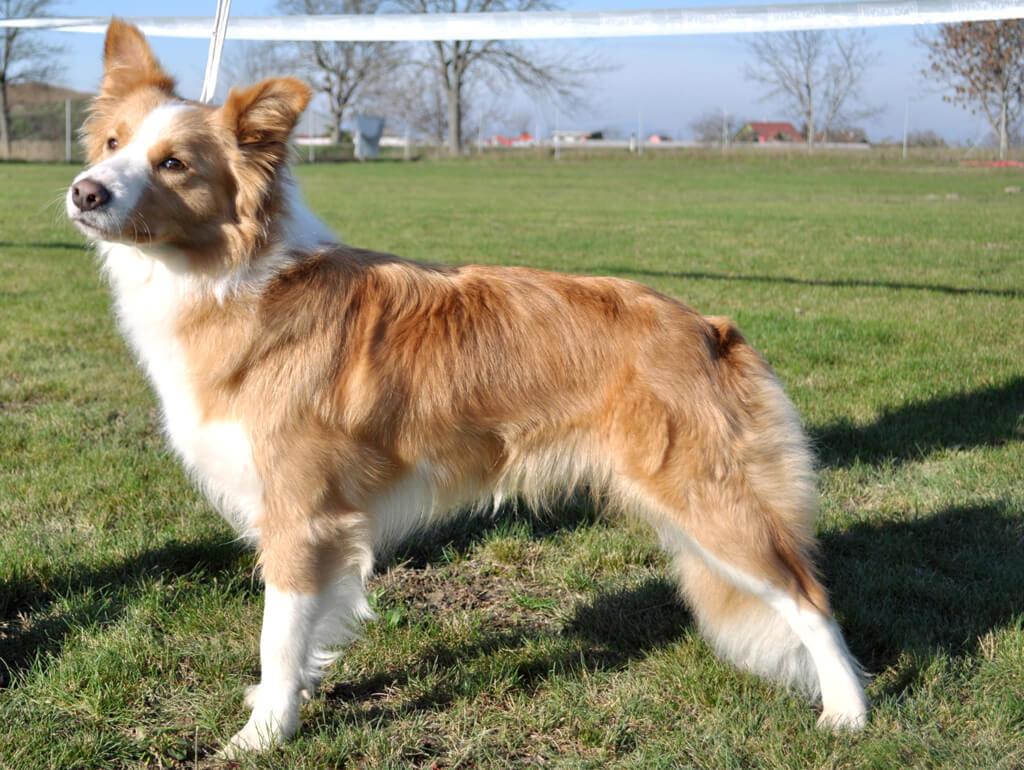 Beautiful Jessica Vasky Dog